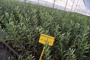Algunas imágenes de nuestras plantas